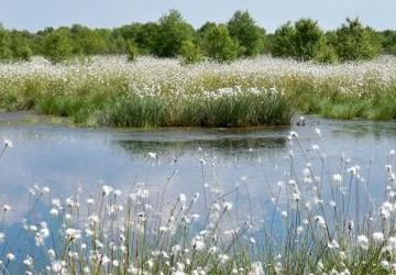 Reservierungen - Beispielfoto: Moorlandschaft