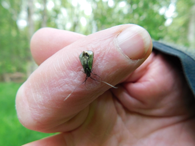 unbekanntes Insekt©FV Moorbahn Uchter Moor e.V. (Rovena Engehausen)